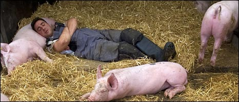 sleeping with the pigs